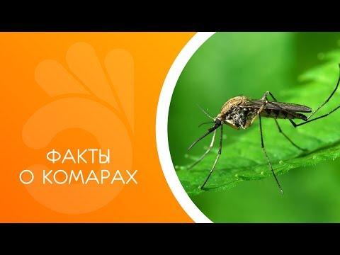 Факты о комарах.
