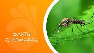 Факты о комарах. Комары полезны?