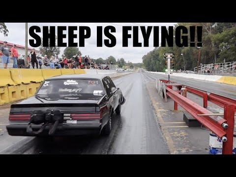 BLACK SHEEP MAKES