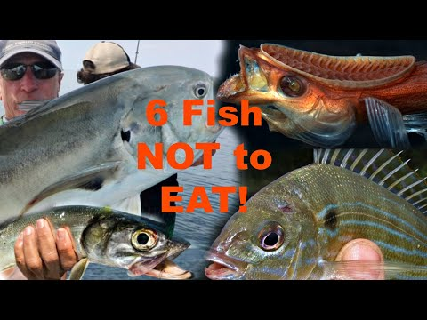 6 Saltwater FISH You Should NOT Try To Eat!