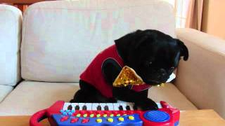 チョコが独創的なピアノ演奏をします(笑)アニマルセラピー(CAPP活動...