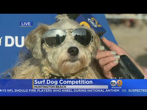 Dogs Prepare To Shred Waves In Orange County