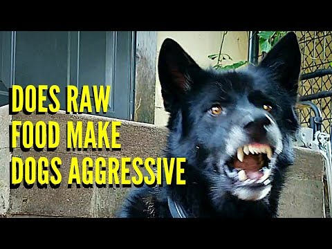 Does RAW Food Make Dogs Aggressive