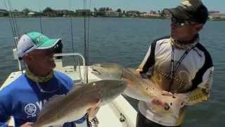 Redfish fishing in Sarasota Florida using live Pilchards - Sportsman s Adventures