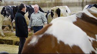 Un vaccin au secours des vaches laitières