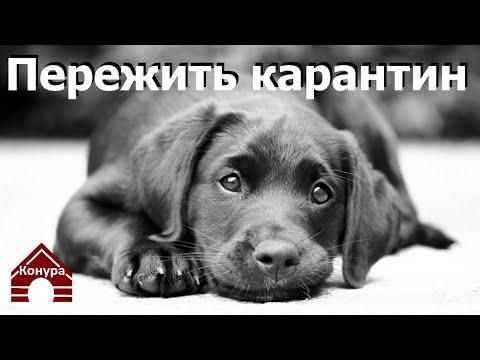 Чем заниматься с щенком на карантине