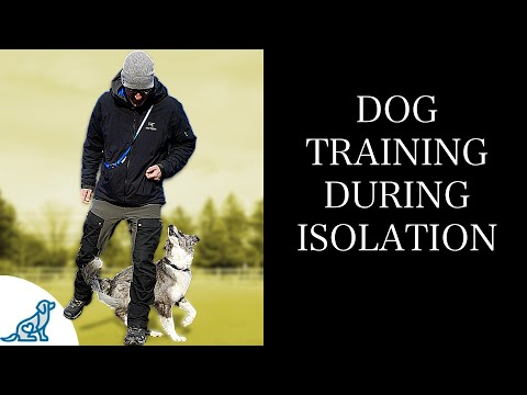 3 Dog Trick Training GOALS For Your Time In Self-Isolation!