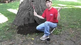 Living Inside a Hollow Tree!