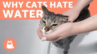 Why Does My CAT HATE WATER?  (4 Reasons)
