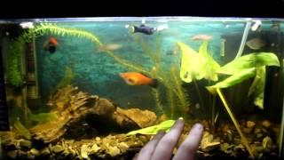 Мой аквариум №17 - улитки катушки,отросток растения,и другие разговоры
