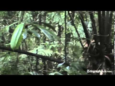 Rare footage of isolated Amazon tribe