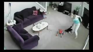 Bakıcı çocuğa bağırınca kediler bakıcıya saldırdı