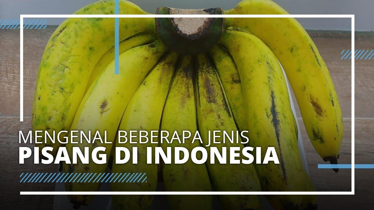 Mengenal Beberapa Jenis Pisang Terenak di Indonesia, Ada Pisang Susu hingga  Pisang Ambon