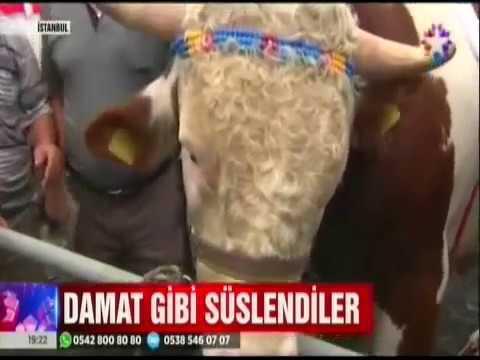 Star Tv- İstanbul Sultangazi'de kurban güzellik yarışması düzenlendi.