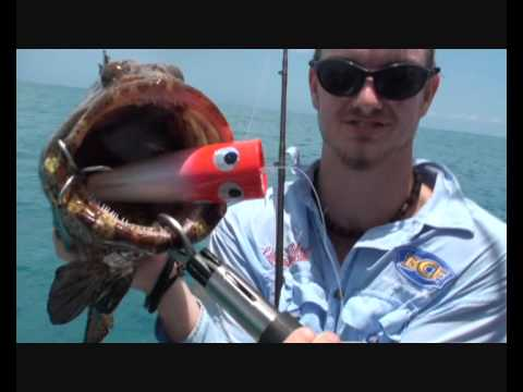 Insane Cod Fishing!! Great Barrier Reef!!