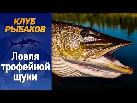 Рыбалка. Секреты ловли крупной щуки.