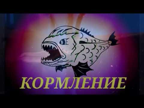 Аквариумные рыбки  Макрогнатус глазчатый