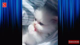 Must watch new funny cats and dogs compilation 2019 - Episode-5  - Funny vines