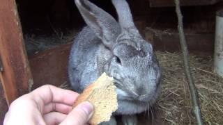 Кролик - прикольное животное, кормление кролика(, 2013-02-25T22:07:28.000Z)