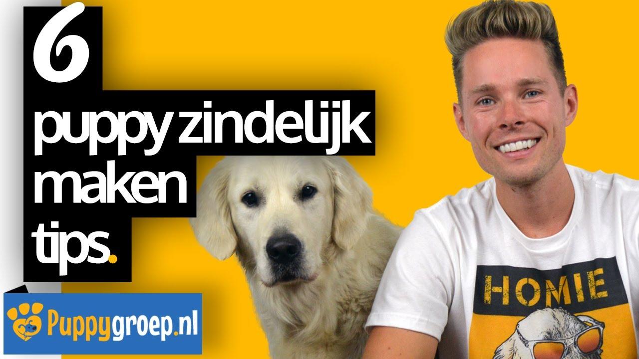 Download 6 Puppy Zindelijk Maken Tips voor de Snelste Resultaten (Puppy Zindelijkheidstraining)