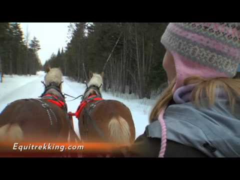 Driving a Horse Drawn Sleigh