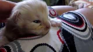 То teach the cat to sleep.Учить кота спать.