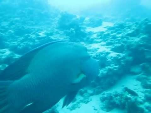 Red Sea Tours, Private Tours, Sea Activities with World Tour Advice
