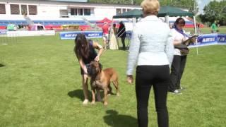 Выставка собак Смоленск