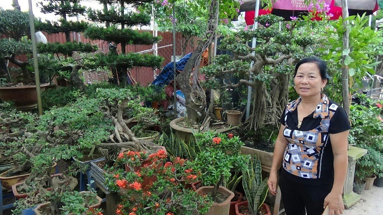 SH.1378.Báo giá hấp dẫn nhiều loại cây cảnh tại vườn Đỗ Vững.Chợ Vạn Phúc.Hà Đông