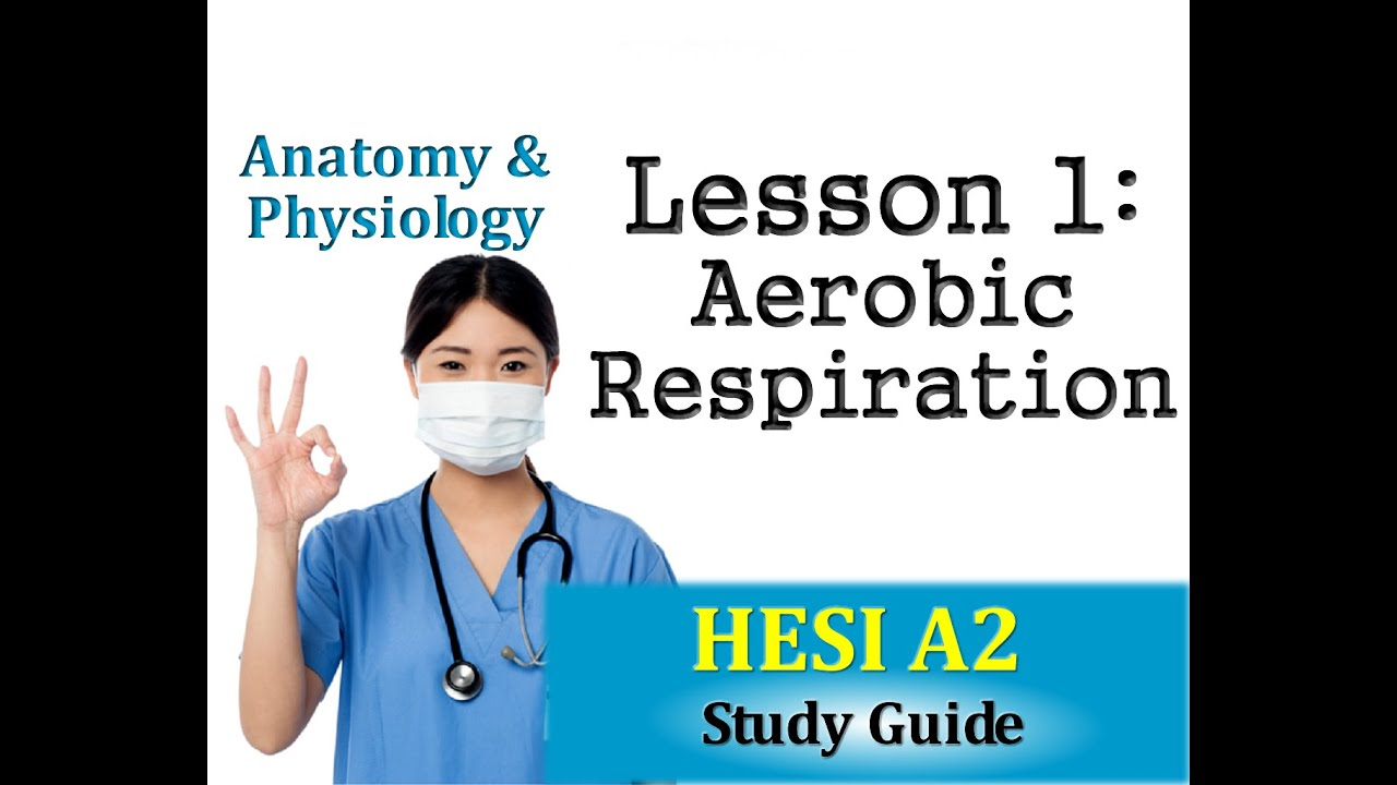 HESI Anatomy and Physiology - Lesson 1 Aerobic Respiration - YouTube
