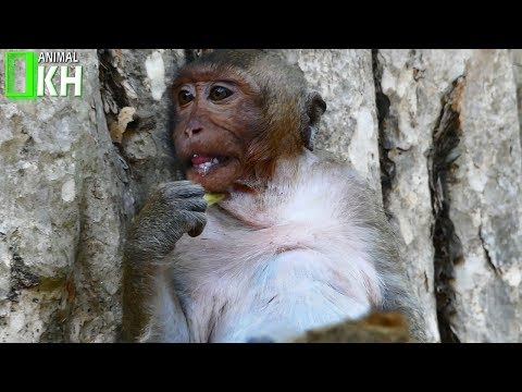 Baby monkey SP so silently and very sad today because Mum not give him some milks