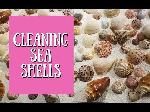 DIY Cleaning Sea Shells