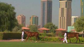 Zabeel Horse Racing Stables, Dubai by Asiatravel.com