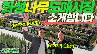 대림묘목농원 경기지부 1호점! 화성나무도매시장을 소개합…