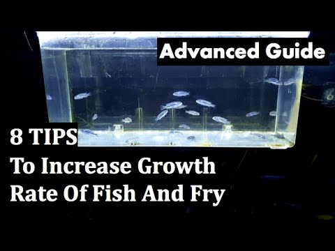 How To Grow Your Fish And Fry Faster- 8 Tips (Advanced Guide)