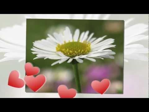 Daisy's Song (Dominic Balli)