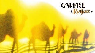 Camel - Sahara