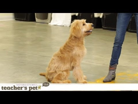 Prevent Your Dog From Food Guarding | Teacher's Pet With Victoria Stilwell