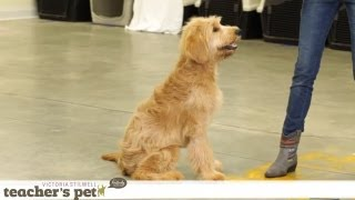 Prevent Your Dog From Food Guarding   Teacher's Pet With Victoria Stilwell