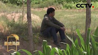 《遍地英雄》 20200402 农民博士——马瑞强|CCTV农业