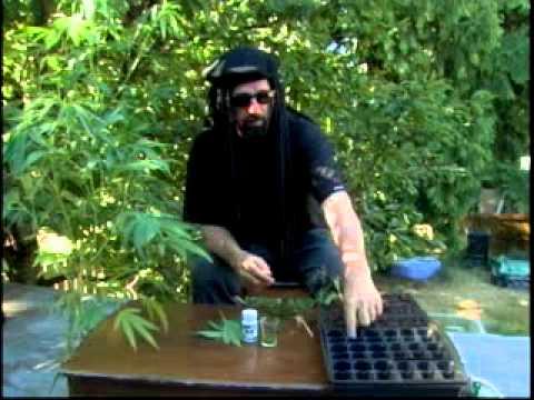 Фильм высший пилотаж выращивания марихуаны что можно сделать с зеленой коноплей