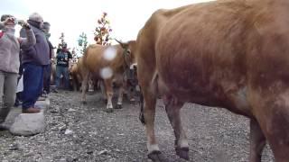 Transhumance 2014 au village d'aubrac