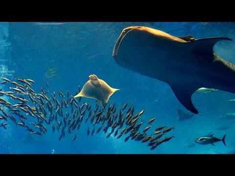 Sons subaquáticos com imagens do 3º maior aquário do mundo