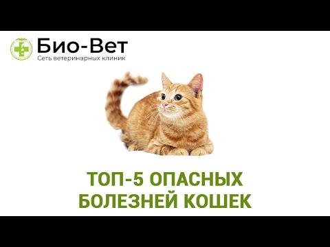 Топ-5 Опасных Болезней Кошек & Самые Опасные Кошачьи Болезни. Ветклиника Био-Вет