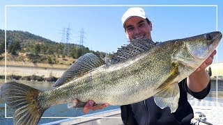PIĘKNY SANDACZ i PIERWSZY SUM | Ebro Trip pt. 1