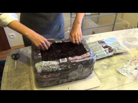 Сорта миниатюрных роз для сада и выращивания в домашних