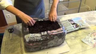Шампиньоны. Начало.(Продолжаем эксперимент с зимним развлечением скучающих садоводов - выращиванием грибов в домашних условия..., 2015-01-17T20:54:57.000Z)
