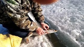 Ловля ЩУКИ И КАРАСЯ в сети отличный улов