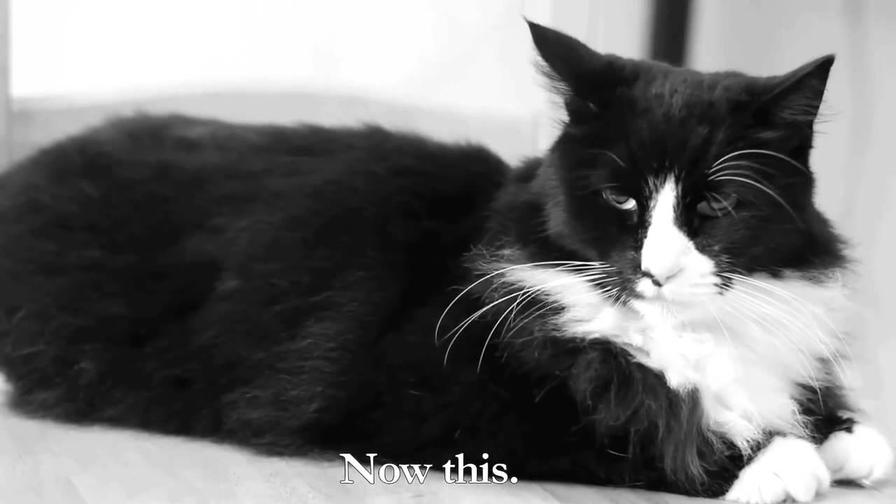 Henri The Cat Youtube
