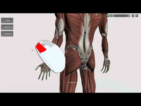 Software Anatomia dos Músculos 3D v 1.21 - YouTube